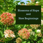Blossoms of Hope and New Beginnings