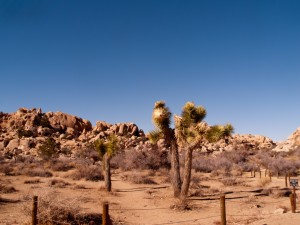 Head of Trail, Joshua Tree National Park, California, USA