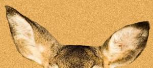 Deer-Ears