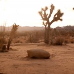 Desert Clearing, Joshua Tree, California, USA