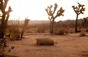 Desert Clearing, Joshua Tree, California, USA