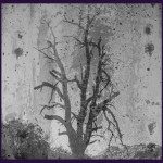 Dead tree used to symbolize the grieving process