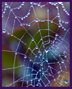 A Spider Web as a Metaphor of Life